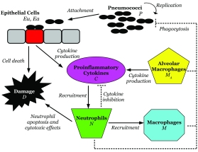 BacterialKinetics.jpg